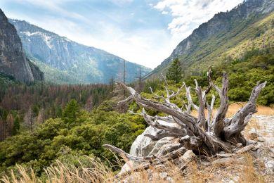 Yosemite_2017_Im10