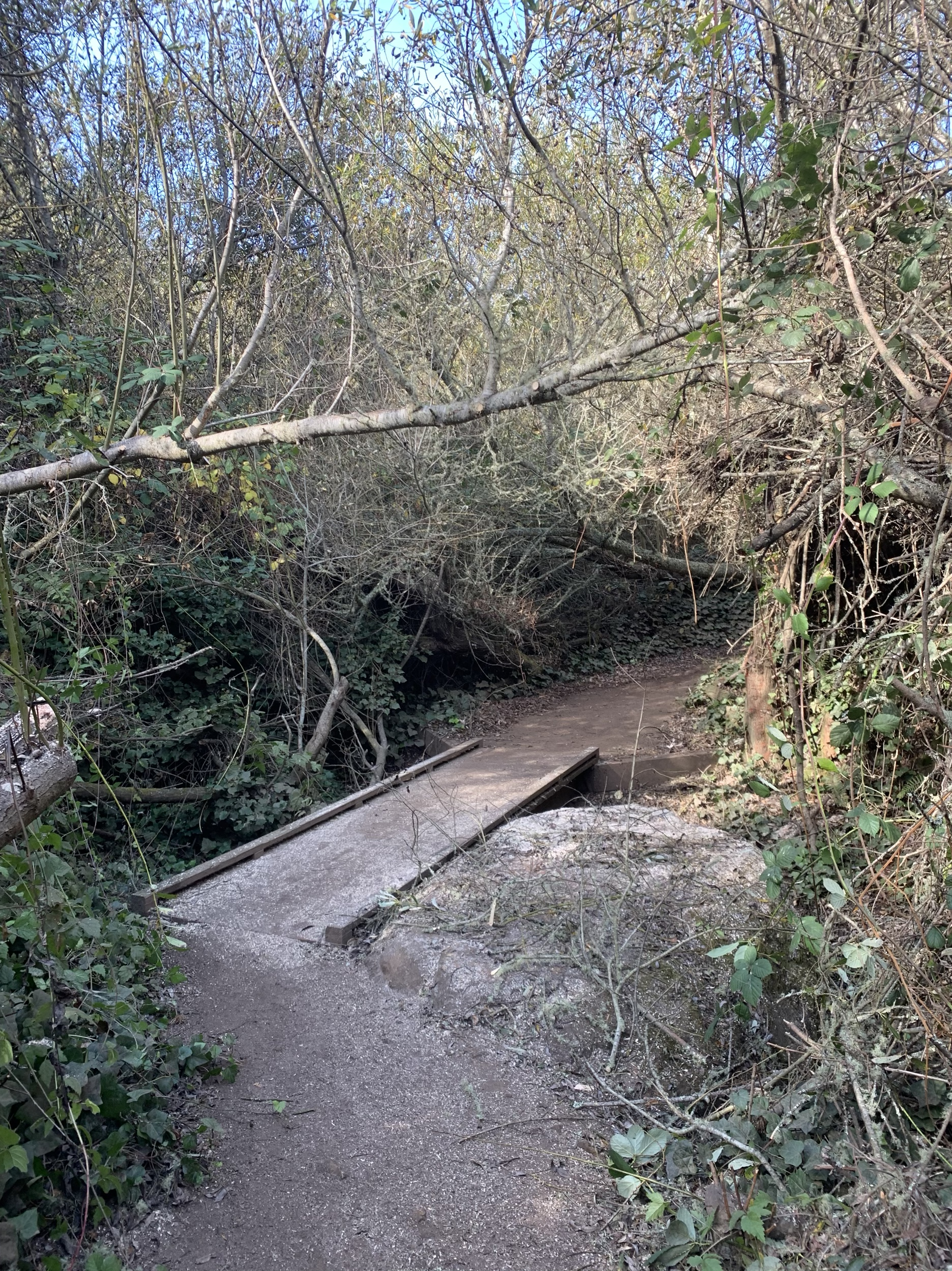 A portion of trail at Glen Canyon after brush removal