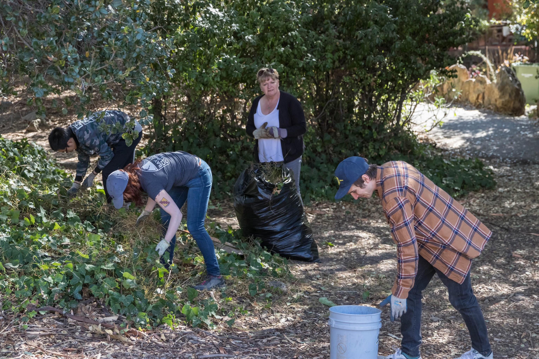 a crew of volunteers remove weeds